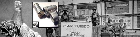 War Pigeons
